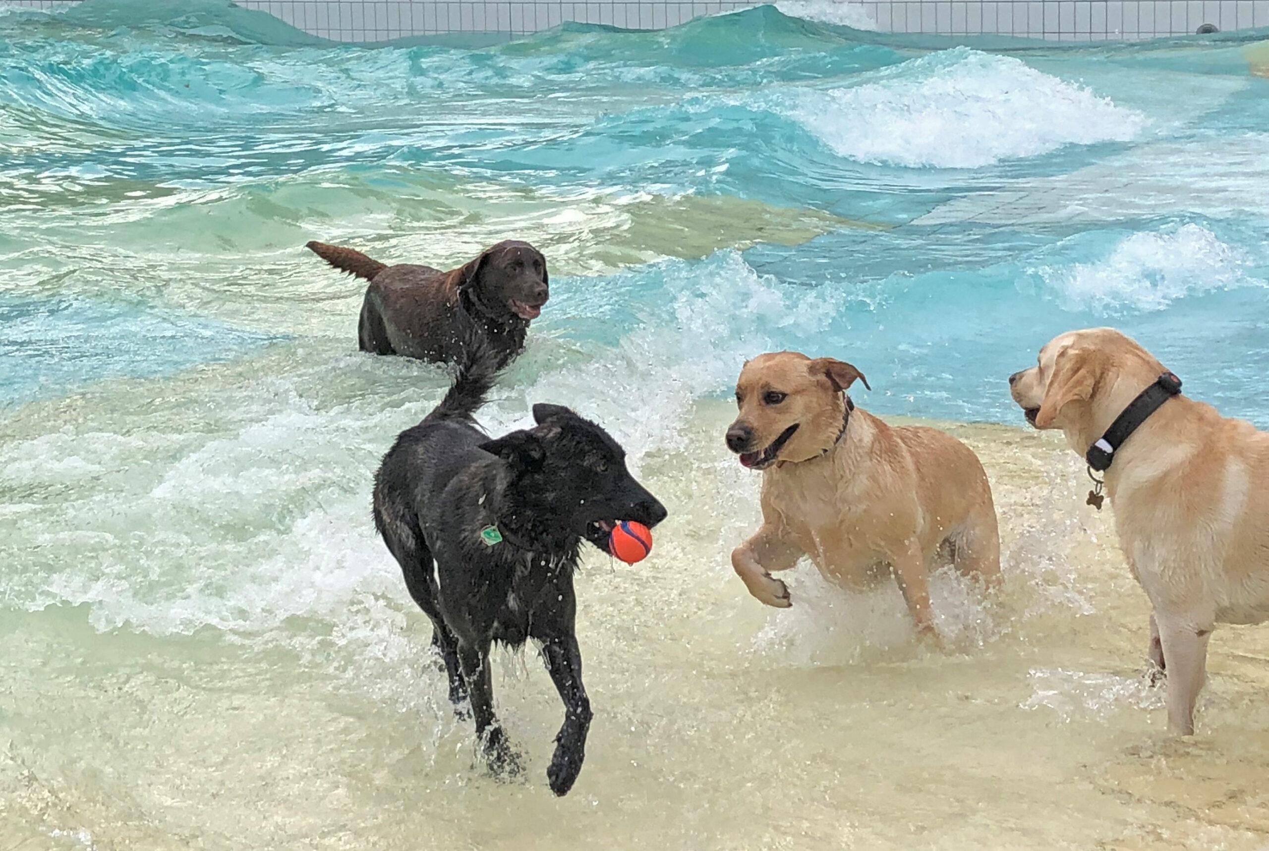 Hundebadetag im Bambados